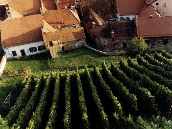 ten amazing vineyards inthewineplace